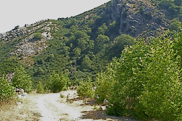 Locality on Mt.Ochi, Evia, GR, where we also found <em>Euboeana castaneivaga</em>