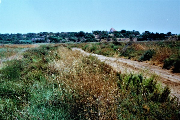 One of the habitats near Tavira, Algarve (Portugal) where <em>T. josei</em> occurs  (photo J.A.QUARTAU)