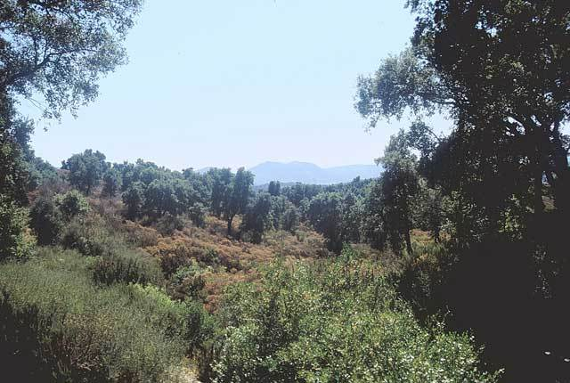 Typical habitat of <em>T. quadrisignata</em> in southern France - photo J. Sueur